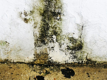 mold-growth